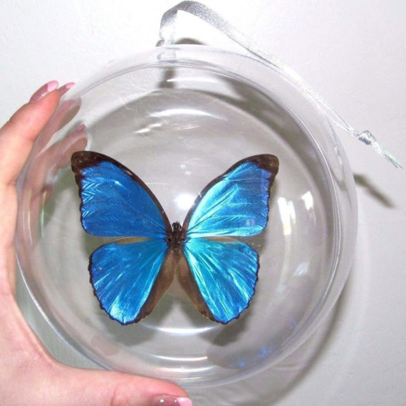 Real Blue Morpho Menelaus Didius Butterfly Christmas Ornament Gift