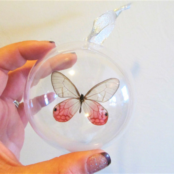 Real Peruvian Pink Cithaerias Merolina Glass Clear Wing Butterfly Christmas Ornament Ball Globe Round Gift