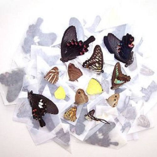 10 Butterflies Moths Wholesale Mix Lot