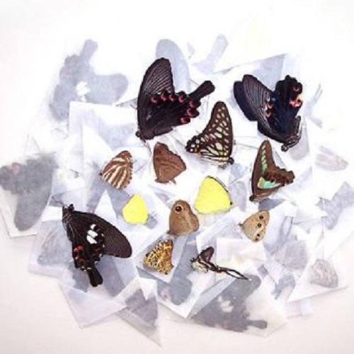 10 Butterflies Moths Wholesale Mix Lot