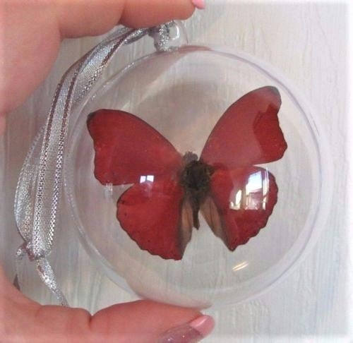 Real Red African Sangaris Butterfly Christmas Ornament Gift
