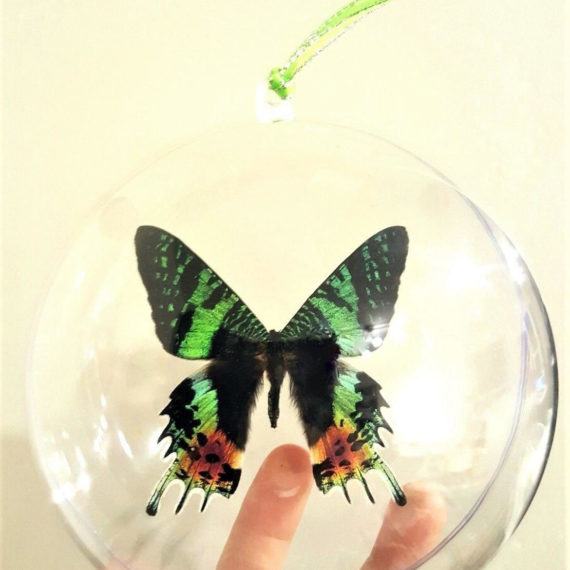 Real Green Recto Madagascar Sunset Moth Chrysiridia rhipheus Butterfly Christmas Ornament Ball Globe Round Gift