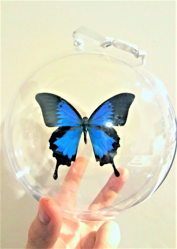 Real Blue Indonesian Papilio Ulysses Butterfly Christmas Ornament Gift