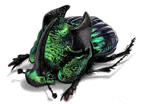 WHOLESALE lot of 10-  Real Green Phanaeus demon male horned rhinoceros scarab dung beetle pinned