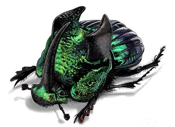 WHOLESALE lot of 10-  Real Green Phanaeus demon male horned rhinoceros scarab dung beetle pinned