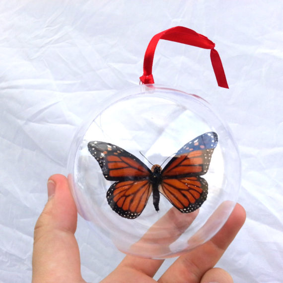 Real Orange Monarch Butterfly Danaus Plexippus Christmas Ornament Ball Globe Round Gift
