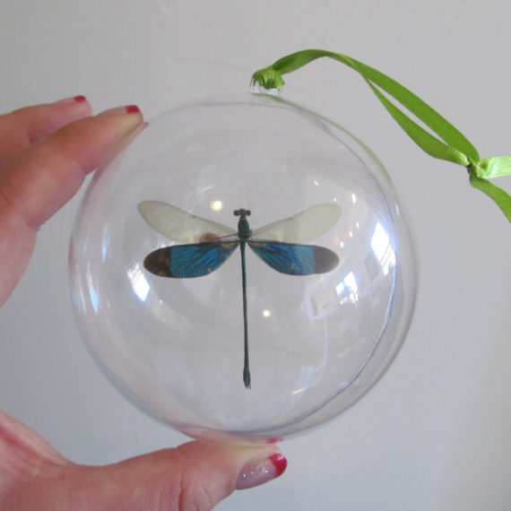 Real dragonfly christmas ornaments for sale