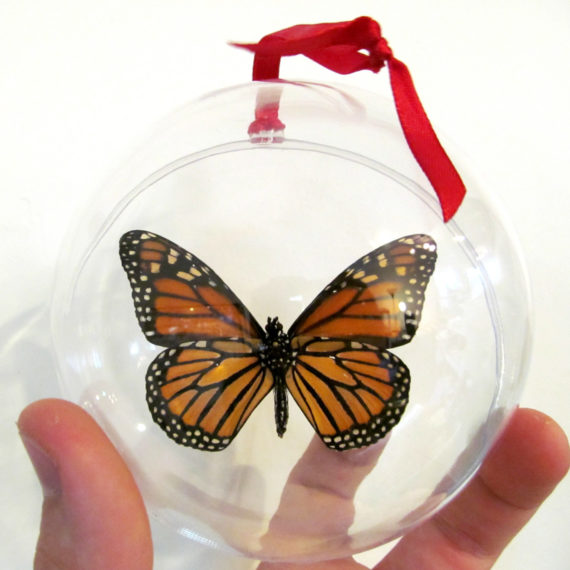 Real Orange Monarch Butterfly Verso Danaus Plexippus Christmas Ornament Ball Globe Round Gift