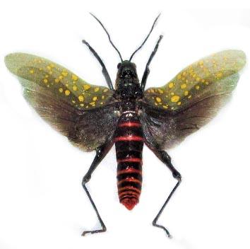 praying mantis stick bug