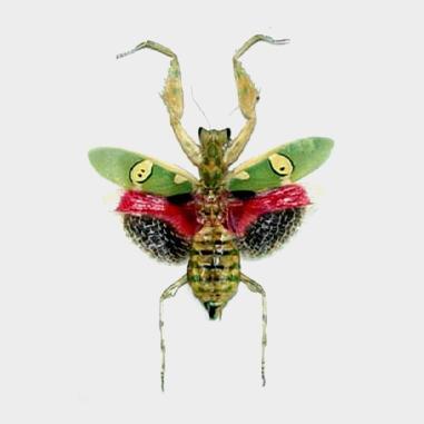 Grasshoppers, Praying Mantis and Stick Bugs